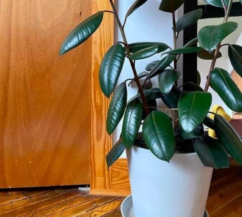plantas prosperidad
