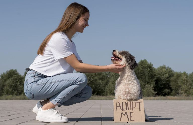 5 Cosas que debes tomar en cuenta antes de adoptar un perro