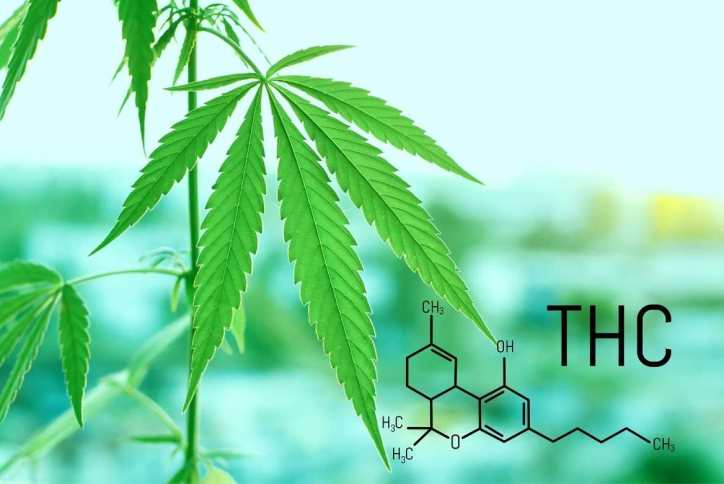 Cuando una persona consume marihuana, el TCH pasa rápidamente de los pulmones a la corriente sanguínea. Y de ahí, al cerebro, afectando su desarrollo y funcionamiento normal