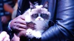 07-grumpy_cat-1170x658
