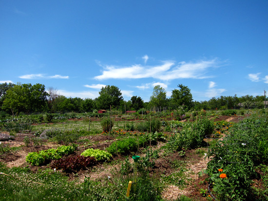 The Community Garden at the Chickaming Preserve, © Susan Barsy