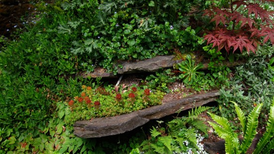Crevices of a terrace overflowing with sedum & ferns, Dunn Gardens, Seattle (Credit: Susan Barsy)