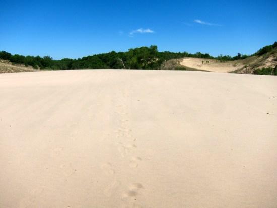 Dune crest, © 2014 Susan Barsy