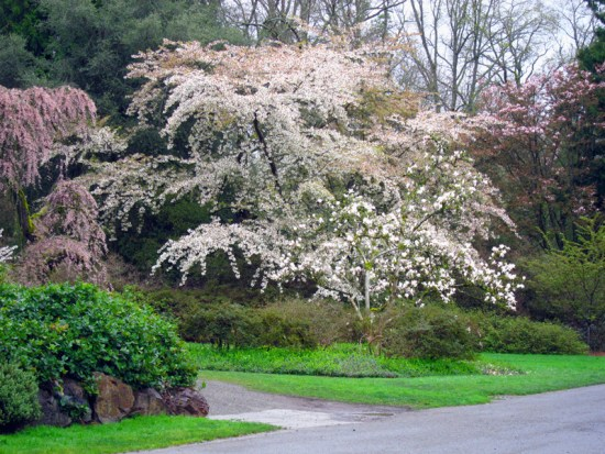 A tableau of spring blooms against mature evergreens and fresh grass.