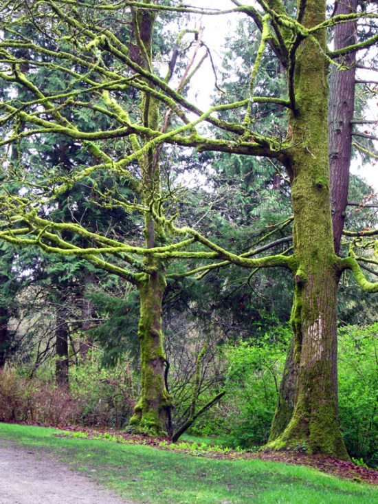 Spindly-armed trees limned with bright moss.