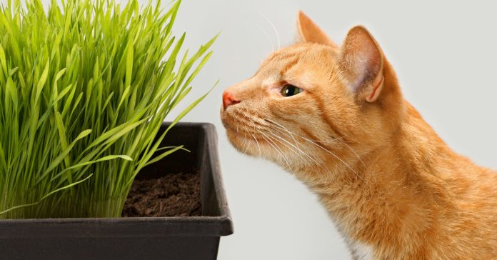 A Beginner's Guide for Creating an Indoor Cat Garden - American Lifestyle  Magazine