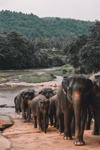 chinese elephants on a journey