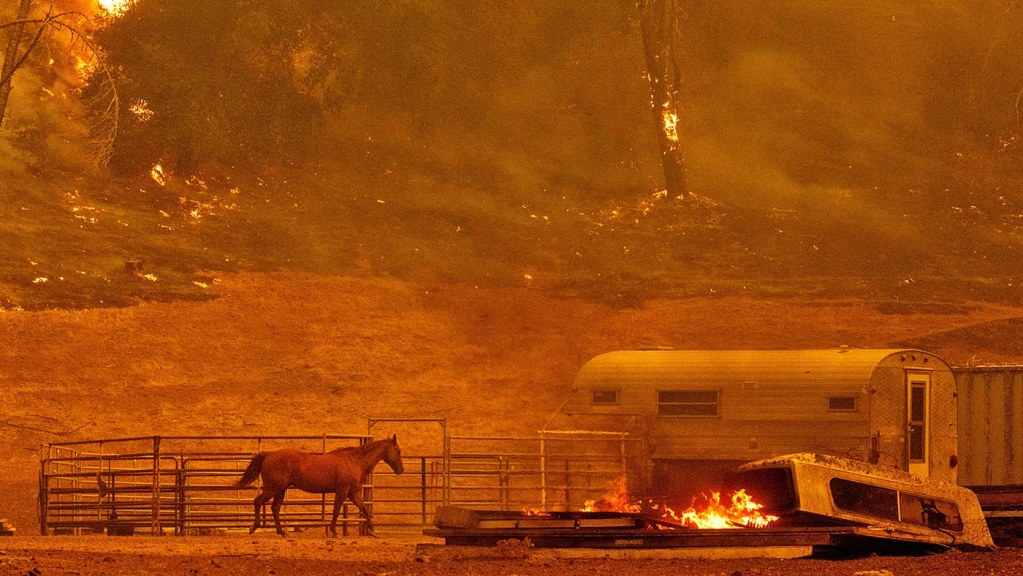 wildfire preparation and evacuation tips for horse owners