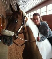 8-pinto-saddlebred