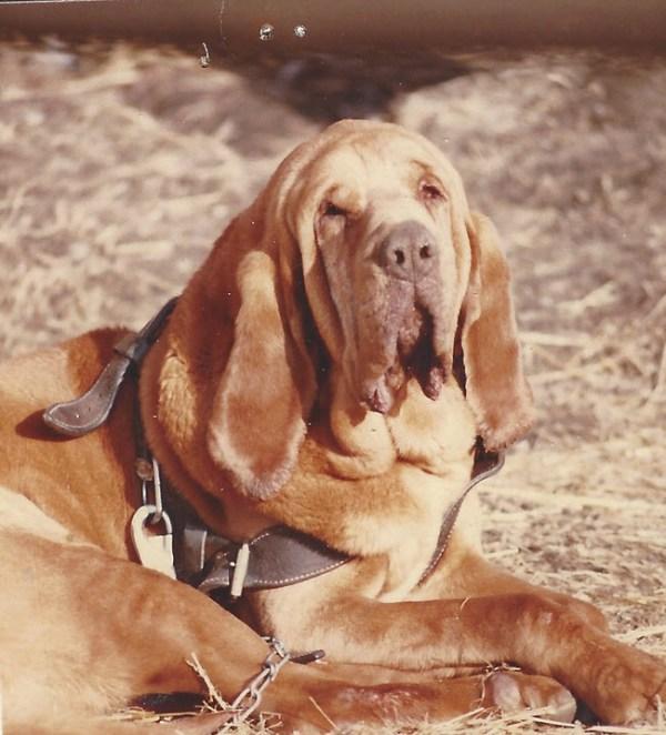 Bob Cameron's Bloodhound Radar