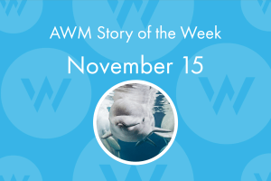 The American Writers Museum's ongoing blog series Story of the week featured a poem about the beluga whales at the Shedd Aquarium on November 15, 2019
