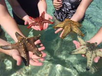 Dazzling starfish are easily spotted in the clear aqua waters of Prison Island.