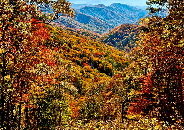 Trees and Mountains with fall colors