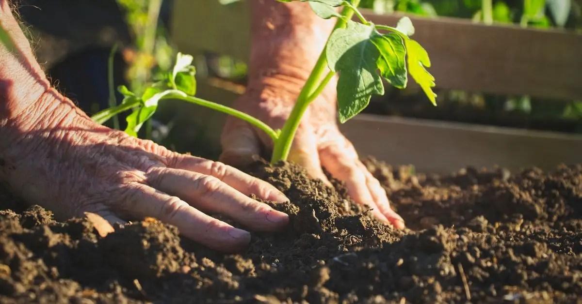 Online Gardening Courses