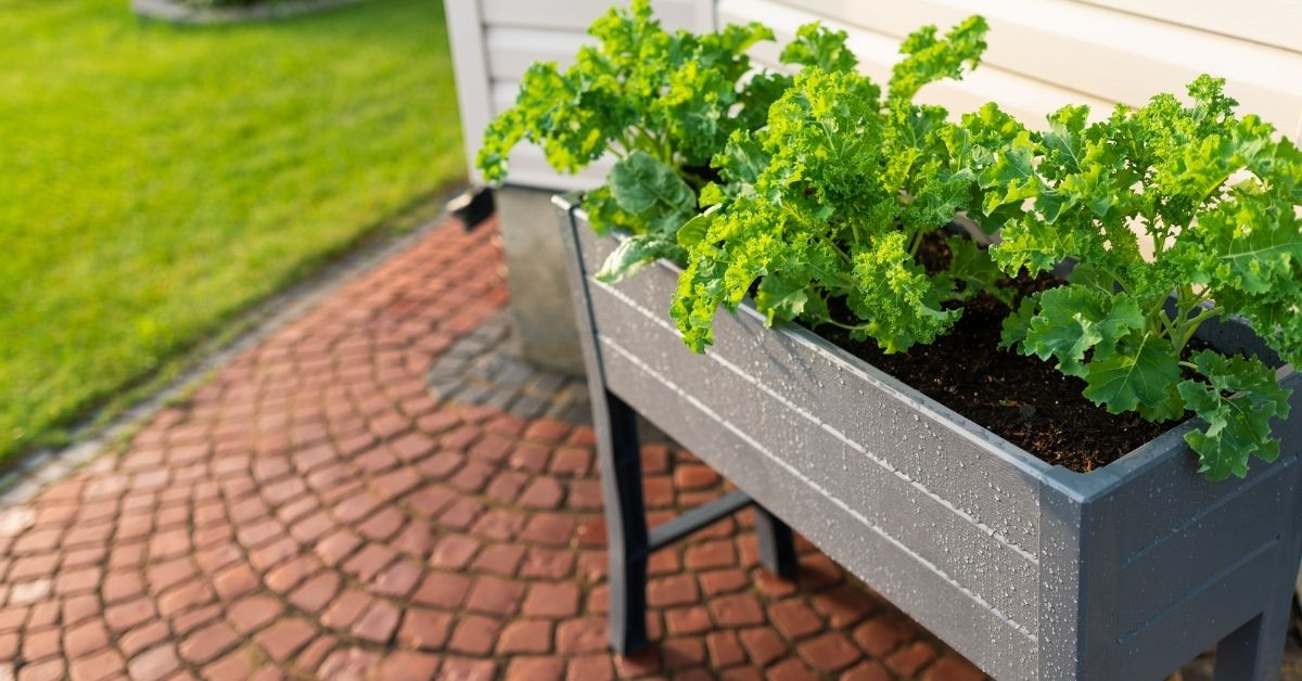 Raised Beds and Container Grown Plants