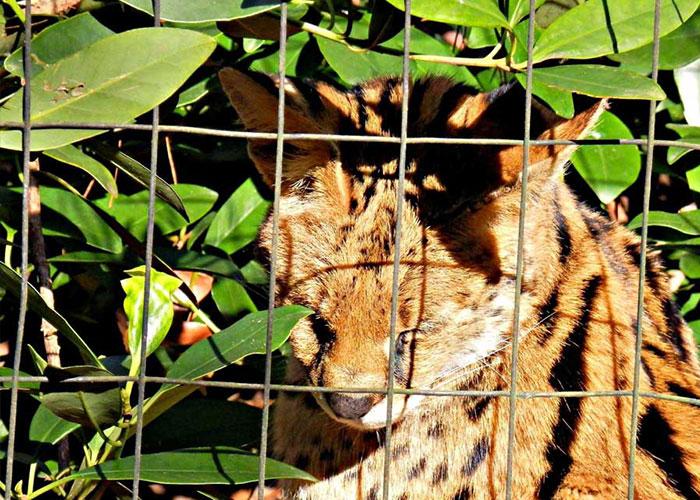 Chehaw Wild Animal Park | Americus Garden Inn Bed & Breakfast, Georgia