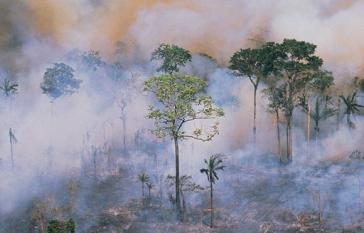 Im Amazonasgebiet in Brasilien wüteten im August 2019 auch heftige Feuer