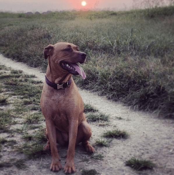 juju at park sunset