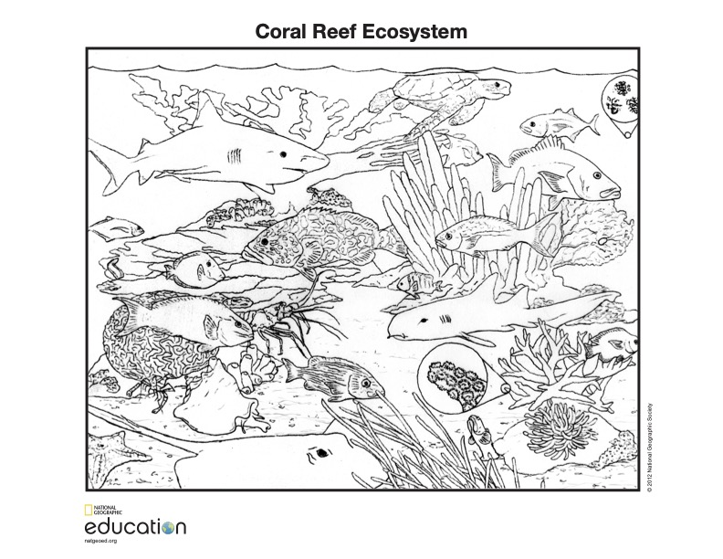 Free Coloring Pages National Geographic