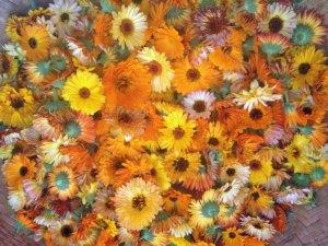 Photo of Daisy flowers