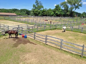 Photo of corrals at Amethyst Farm