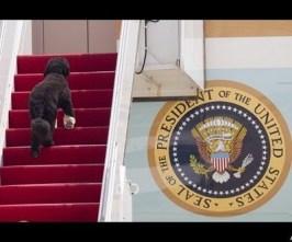 Bo Obama17