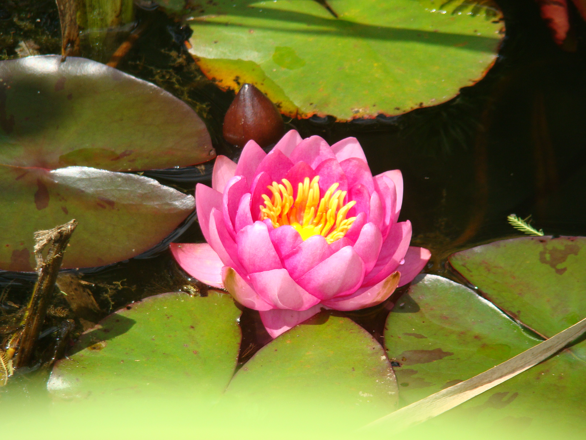 this was the first time any of us had seen a real lotus flower- SO BEAUTIFUL!!!
