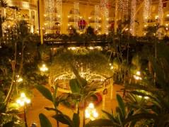 Dzsungel - háttérben a szálloda szobáinak terasza