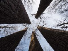 Hol a fák az égig érnek...