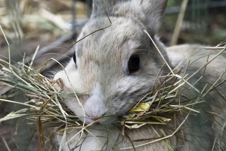 Fieno per il coniglio? È fondamentale! | Amici Di Casa