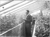 A L'hivernacle soterrat de Sol i vent revisant les noves creacions, 1954, Foto: arxiu família Dot.