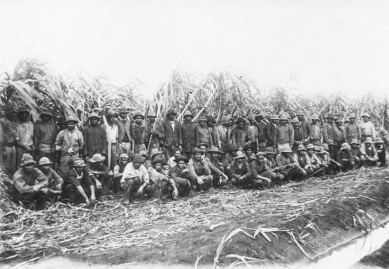 Australian South Sea Islander cane cutters on a sugar cane plantation in Queensland SLQ