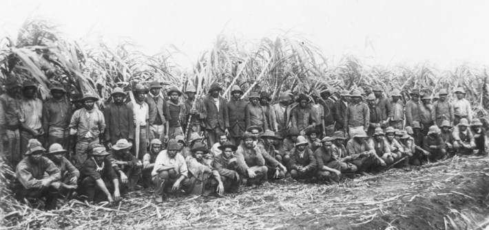 Australian South Sea Islander cane cutters on a sugar cane plantation in Queensland SLQ