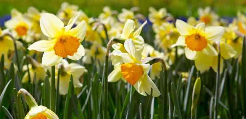 Z wiosną nadzieje rosną