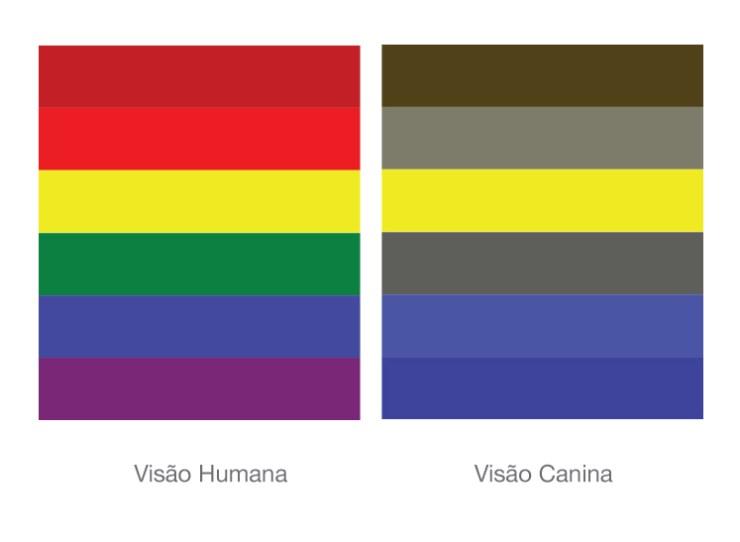 Seu Pug enxerga que cores?