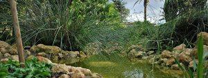 Fuente - Jardín Botánico de Córdoba