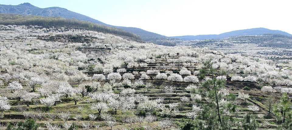 Valle del Jerte y Plasencia