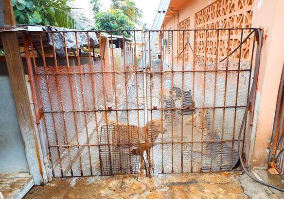 gates prior to rebuild