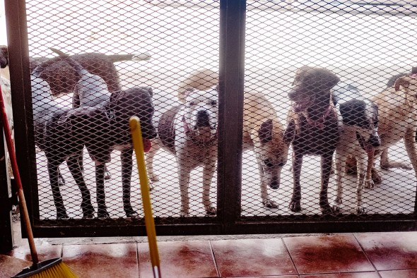 dogs at shelter gates