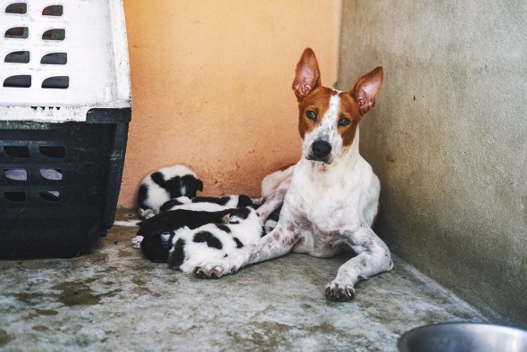 Rescued dog and puppies