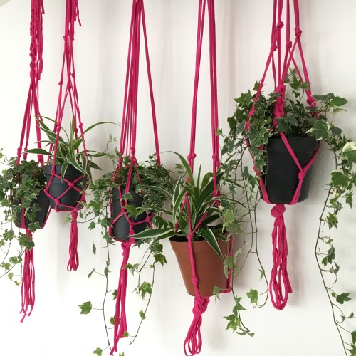 A wall full of modern macrame plant hangers