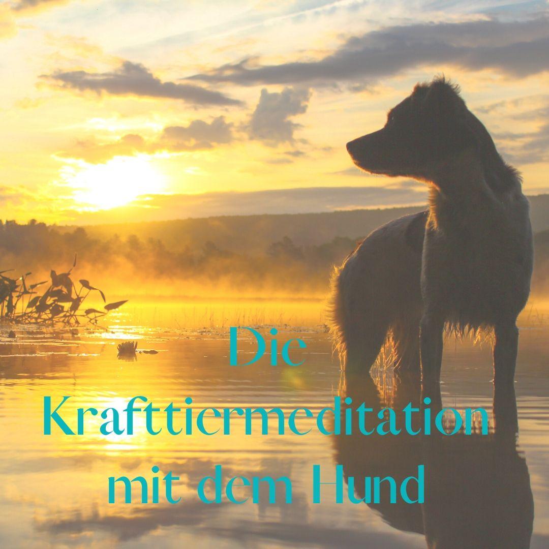 Krafttier Meditation Hund - Gehe auf die meditative Reise