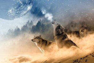 Amika, Krafttier Wolf