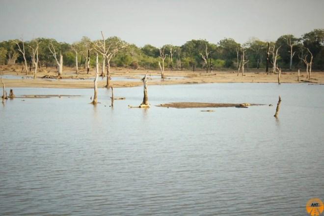 yala parco nazionale
