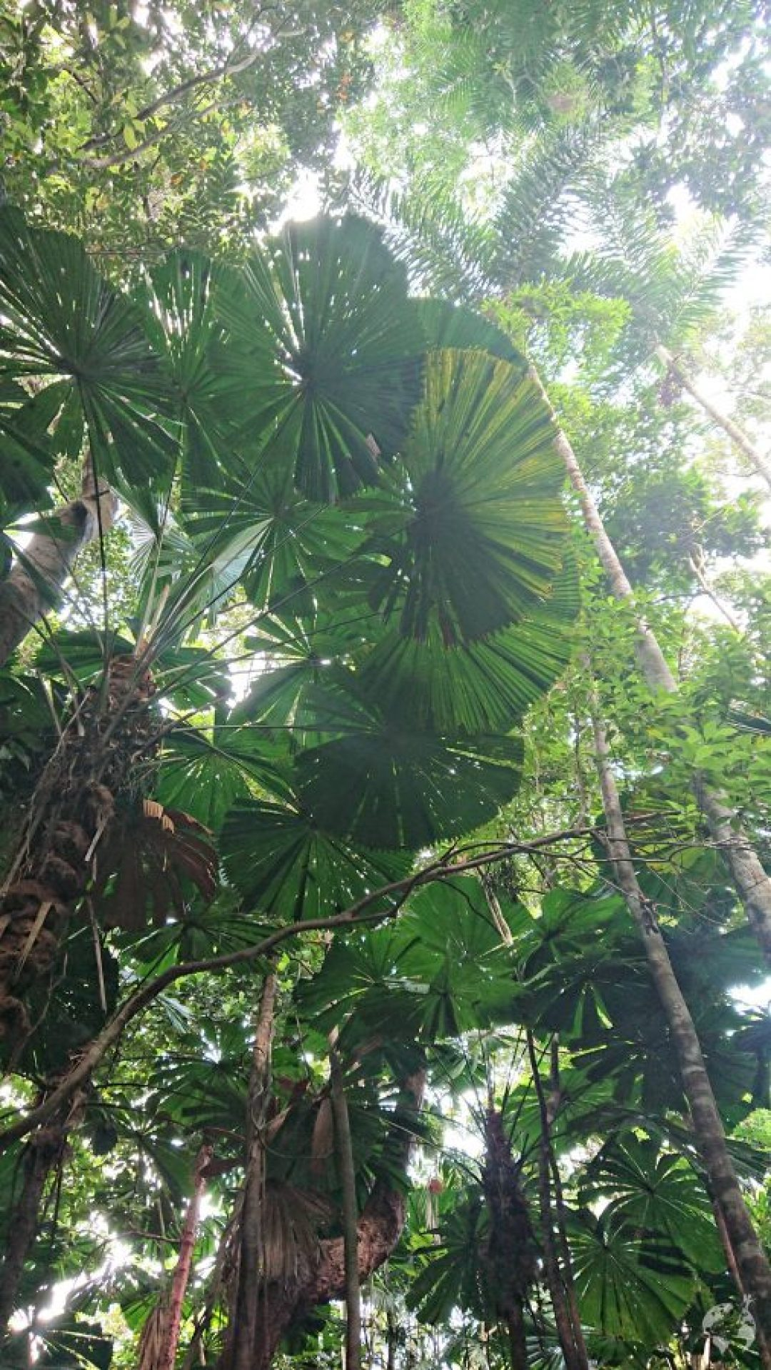 daintree rainforest how to go
