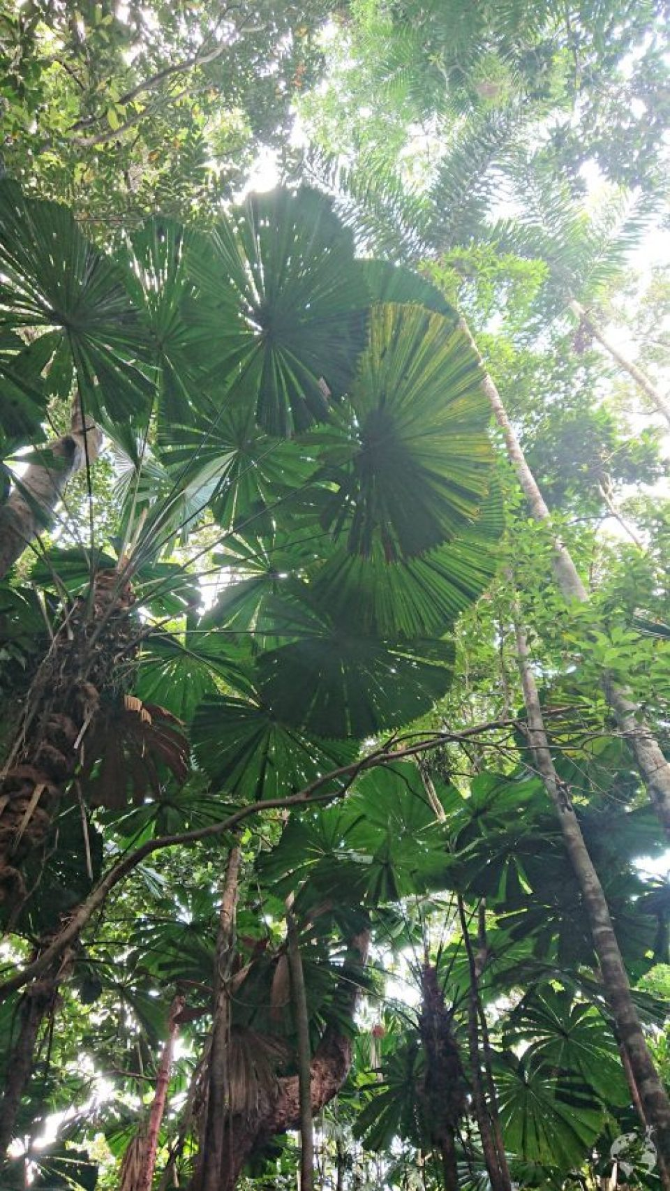 daintree rainforest how to go
