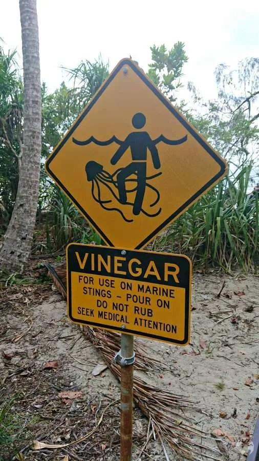stingers danger sign australia