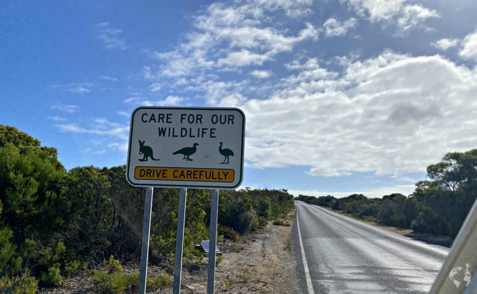 wildlife road sign australia