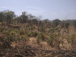 Feu de brousse dans une faune à Kindia