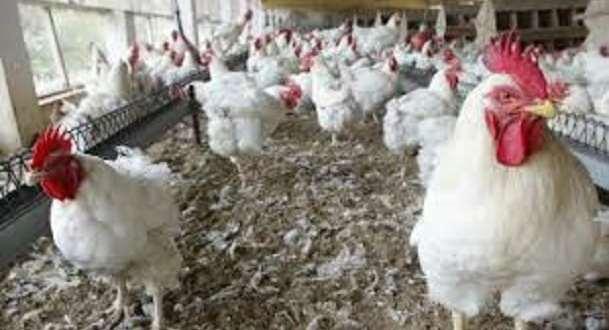 Une ferme de volaille (Photo d'illustration)